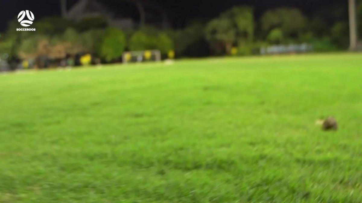 Unexpected visitors interrupt Socceroos training in Hanoi
